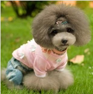 泰迪卷发型图片