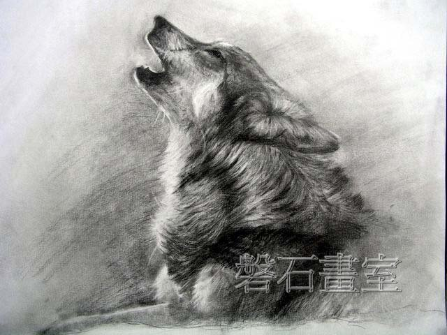 狼的素描画-狼头像 素描 素描图片图片