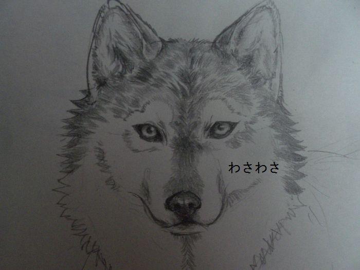 头像狼素描