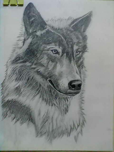 狼的素描画-导读:   新世界头像网为您提供多张素描狼头像图片,包括素描狼头像图片