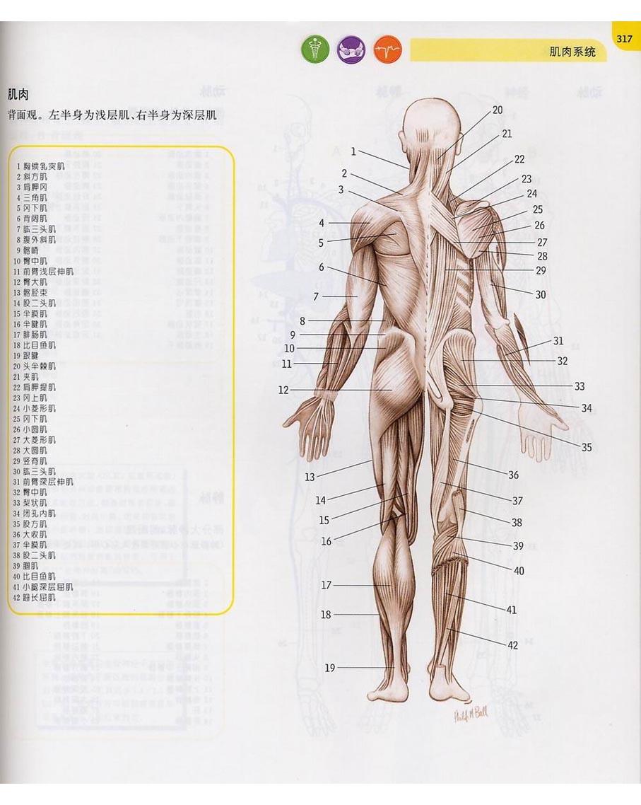人体构成结构示意图_人体骨骼名称