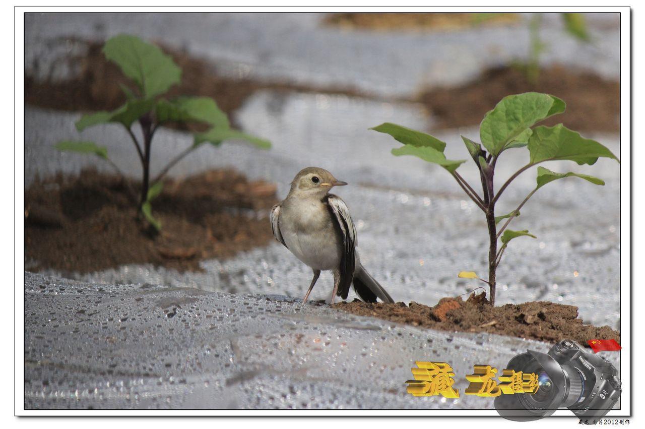 小动物图片 动物图片大全 风景图片 可爱小动物图片大全