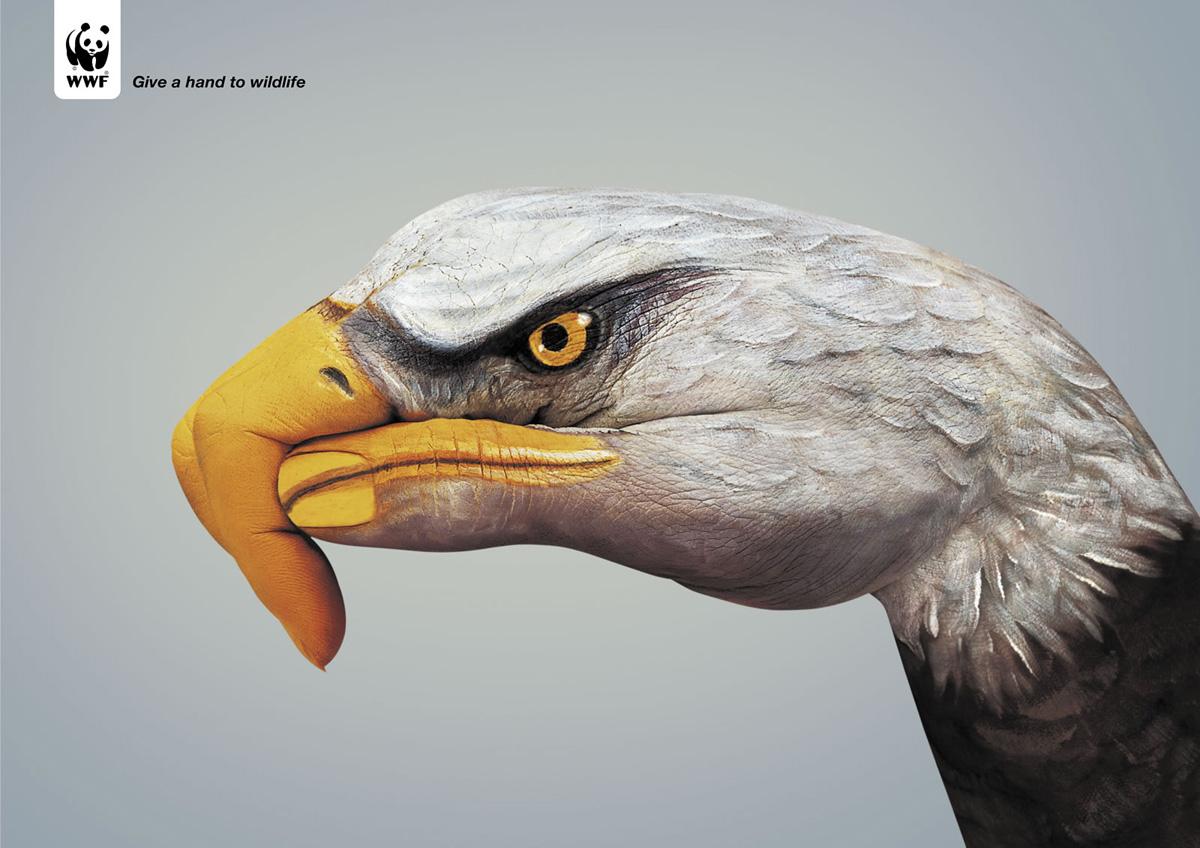 【图】wwf公益广告 保护动物人人有责图片