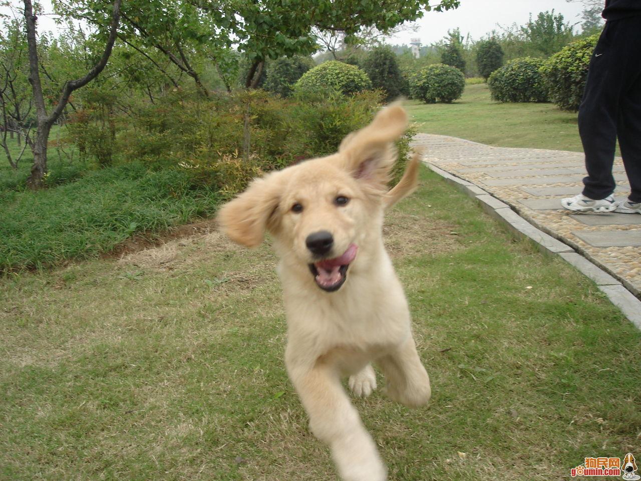 买狗狗去哪里买比较好
