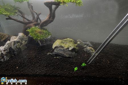 水草造景缸布景教程 高清图片