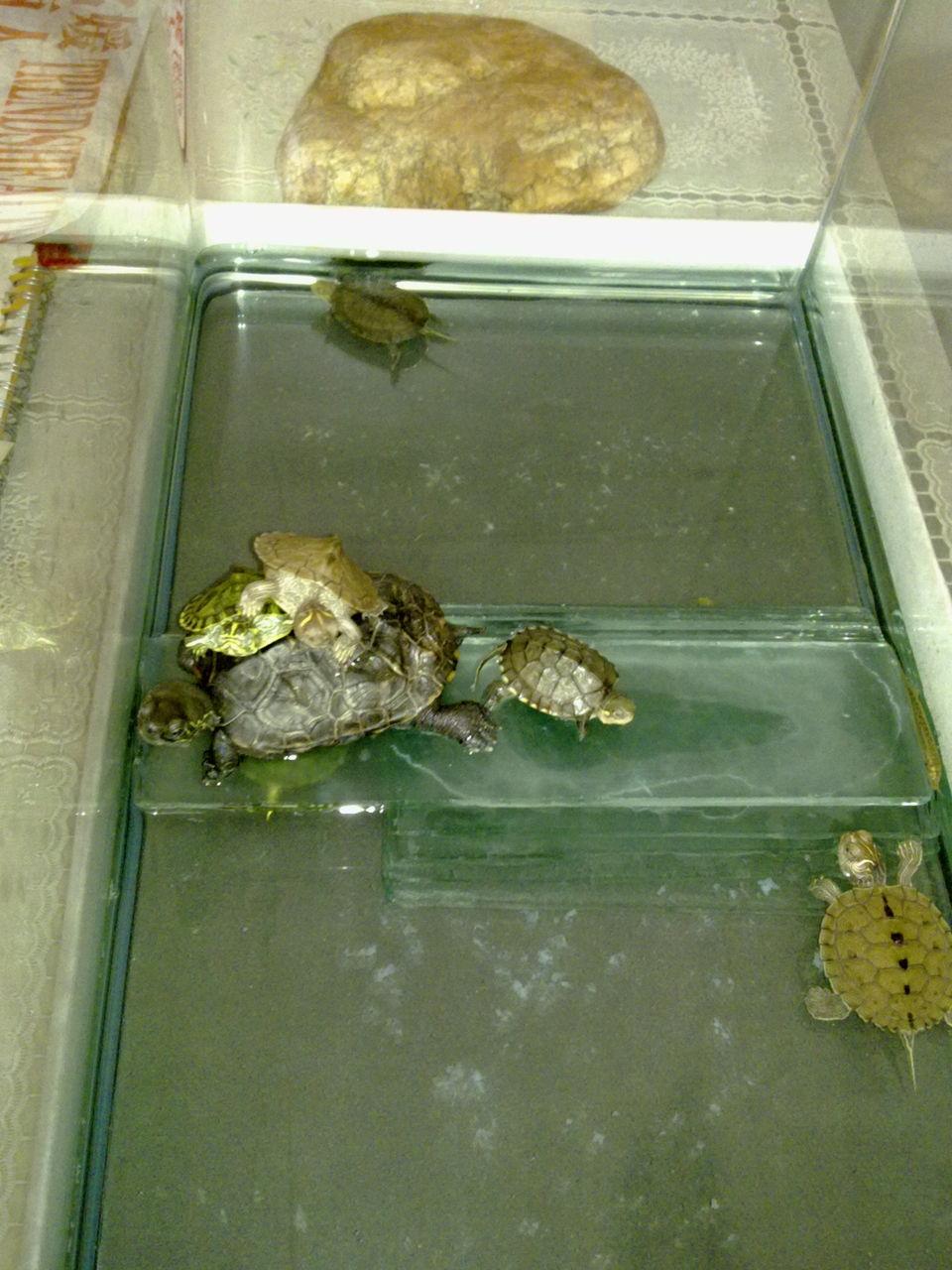 没受精的乌龟蛋 乌龟蛋没受精能孵化吗 受精的乌龟蛋