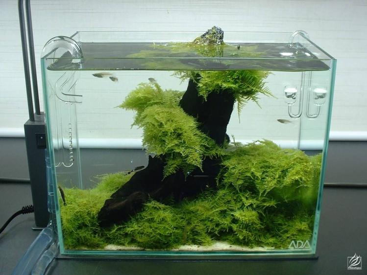 e45ada2f000229a4_ada鱼缸森林造景图片展示