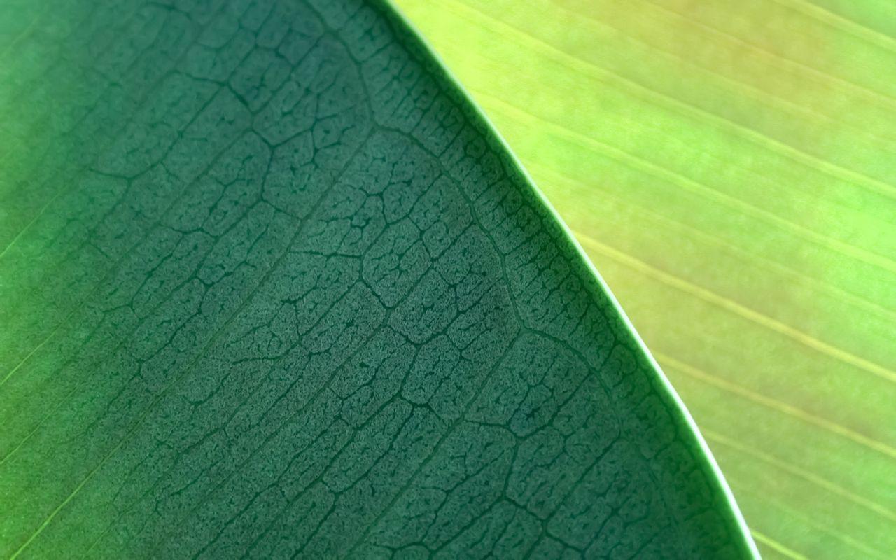 微森部落 > 19201080超高清桌面原始森林  【19201080壁纸帅气】 (294图片