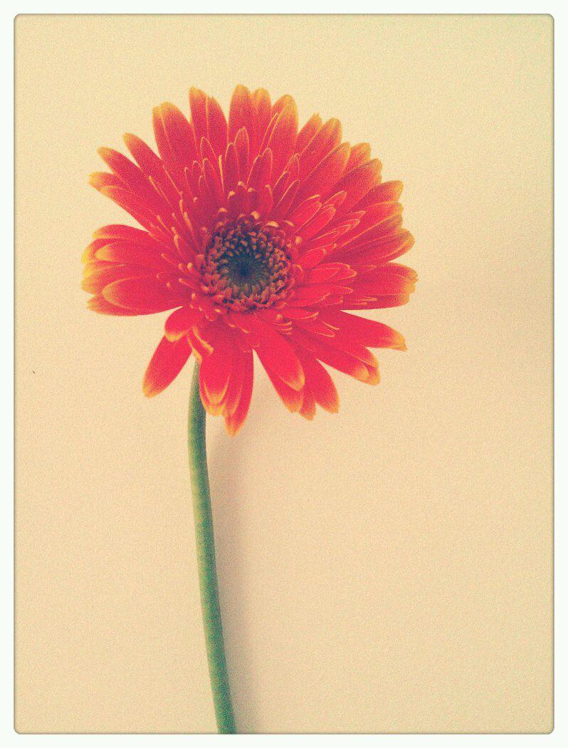 手机捧着一朵花的满背纹身图片展示图片