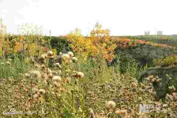 鄂尔多斯市10年绿化植被覆盖率达75%图片