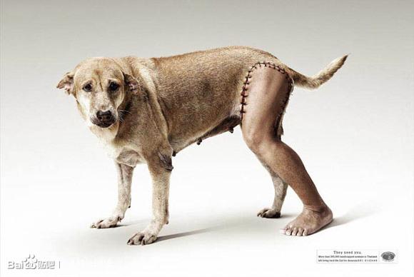 保护动物公益广告!_外蛇吧