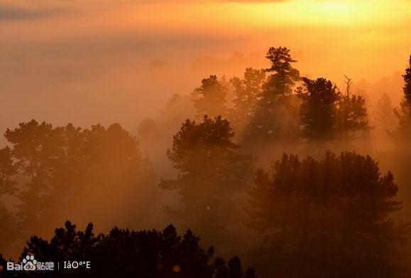 《大森林的早晨》拍摄于丰林保护区图片