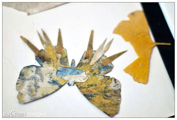 的杨老先生偶然发现银杏叶的形状像极了美丽的蝴蝶,于是他灵