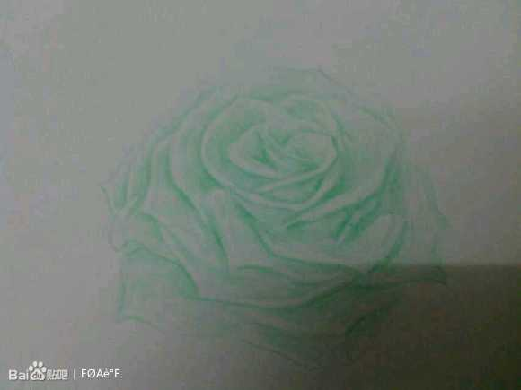 简单玫瑰花静物素描图片