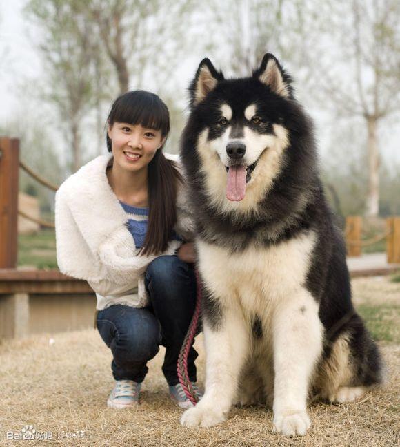 再来几张自己喜欢的爱犬