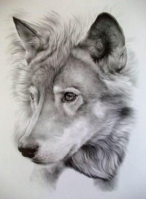人物头像素描_狼的头像素描简笔等,最好看的头像狼素描,希望大家图片