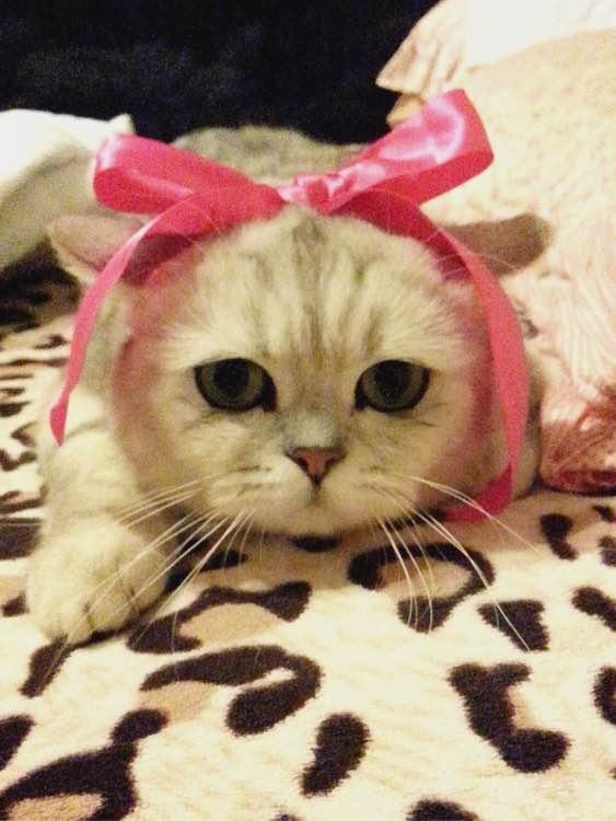 一个喜欢猫的男人_都是妹子吗?听说爱猫的男生将来