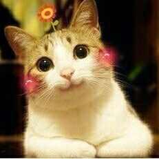 谁有这个猫之类的表情头像啊!图片