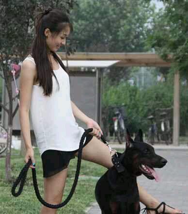 【真正的美女与猛犬合影】献给猛犬吧所有吧友