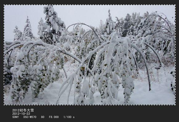 六十年代写雪的一首打油诗:江山一笼统,井上黑窟窿,黄狗身上白,图片