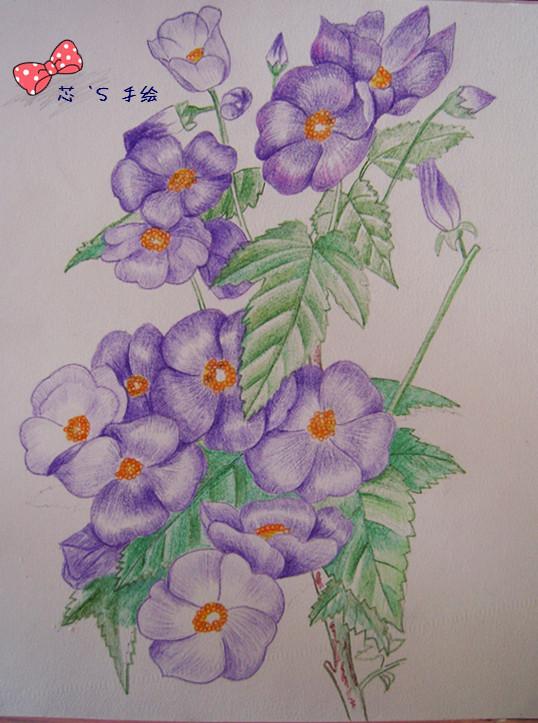 简单的素描图片初学者|简单素描花朵图片大全|铅笔素描花朵图片步骤