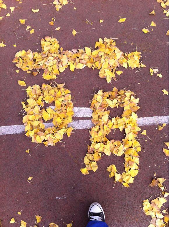 的银杏树是否叶子已经掉在地上,同学们把叶子摆成各种形状 成