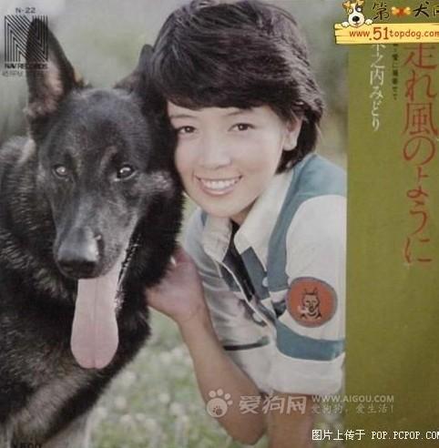 有多少人看过日本电视剧《警犬卡尔》