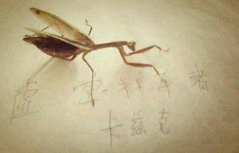 主玩螳螂谁帮忙起个名字粉了 lol吧 百度贴吧 高清图片