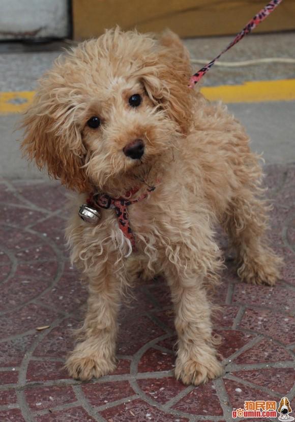 犬类品种大全 喜欢的拿走 《图片》 李毅吧 百度贴吧