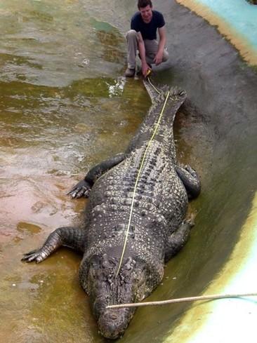 0430 >> 世界上最大的鳄鱼【鳄龟吧】_百度贴吧
