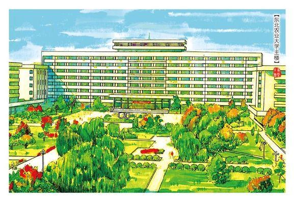 东北农业大学-校园手绘图片
