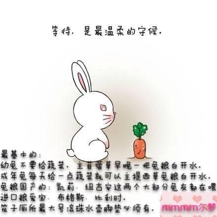 兔子肿么抓图片