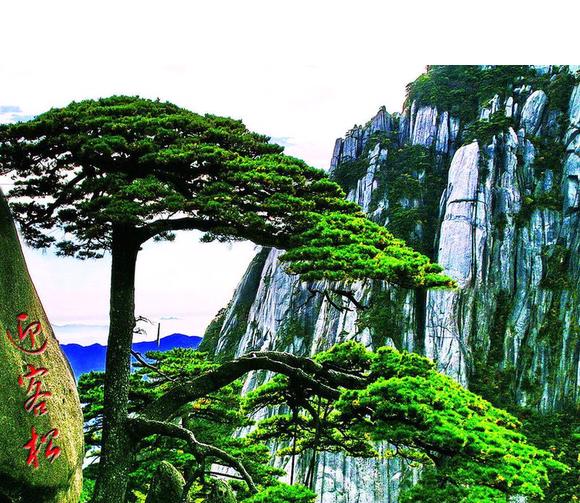 十大千年古树_克拉乌泽吧图片