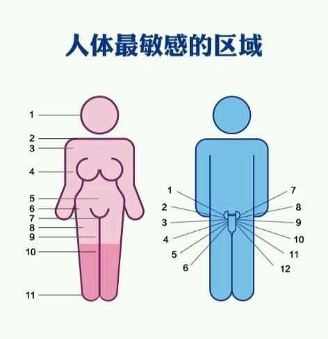 男生女生身体最敏感部位分布
