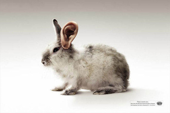 国外保护动物公益广告图片