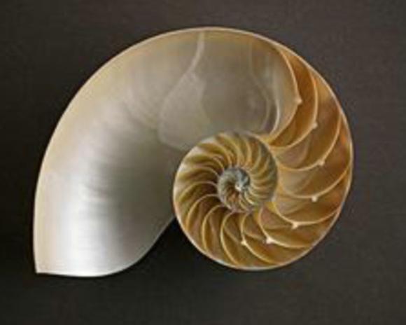 美伦美幻的数学分形几何图案图片