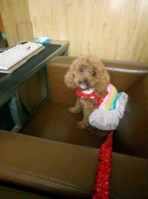 寻狗启示丨齐齐哈尔运建园小区圣水湖老年公寓楼下走失棕色泰迪!