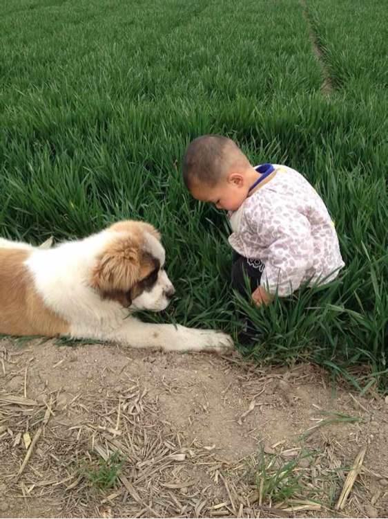 圣伯纳和小孩_求圣伯纳跟小孩子玩耍的有爱图片