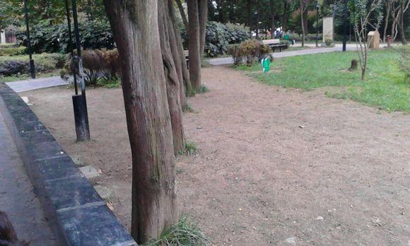 草坪某些地方铺设了石板路,并增加了坐的地方.将草皮隔离起高清图片