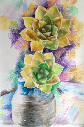 多肉彩铅画 简单好看花的彩铅画 大师风景彩铅画作品