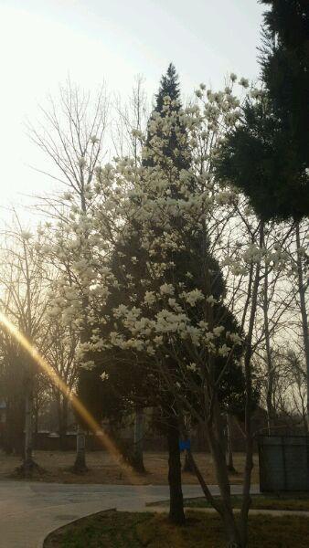 春天你在哪里图片