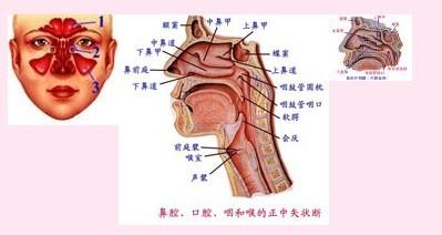 慢性食炎症状_苍耳鼻窦炎方治疗慢性鼻窦炎