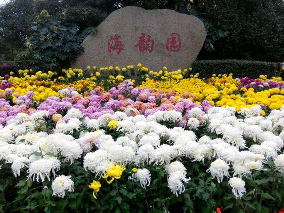 跟一美女同事逛公园 目的竟是请我看菊花