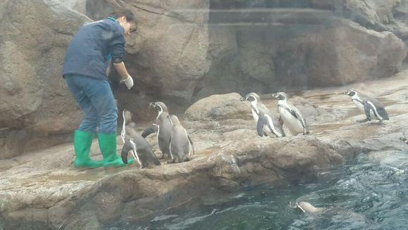 给墨水酱分享下今天去滴海洋公园咩>3 图片
