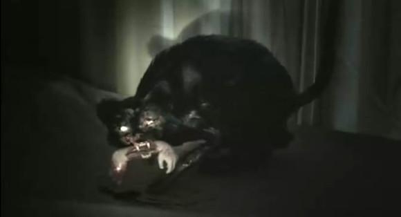 叼着小手臂的表情诡异的黑猫图片