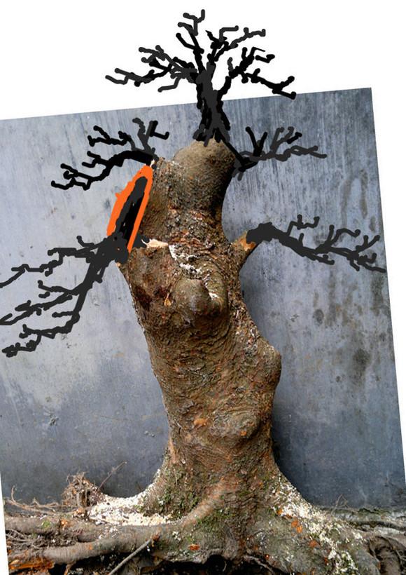 榆树老桩盆景内容|榆树老桩盆景版面设计
