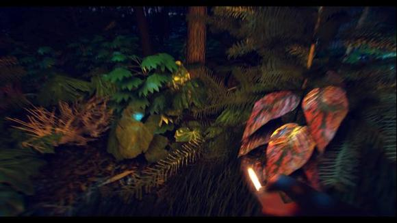 《迷失森林》图片