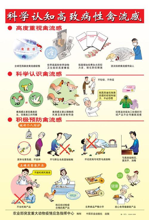 预防人禽流感宣传图片