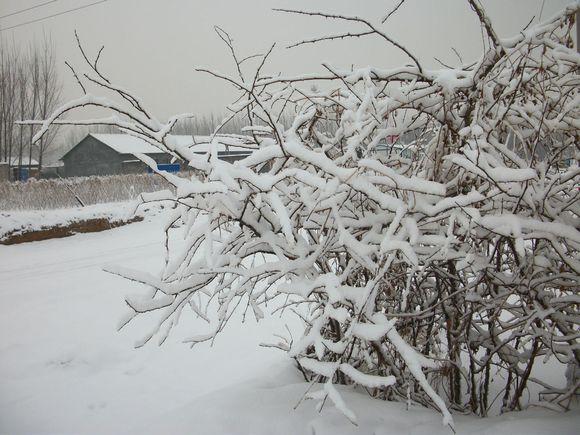 冬日雪景_寒亭人民吧_百度贴吧图片
