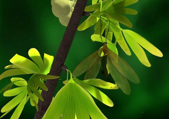 这种昆虫可难找了,它们拟态成与古银杏的树叶相同形状,以便